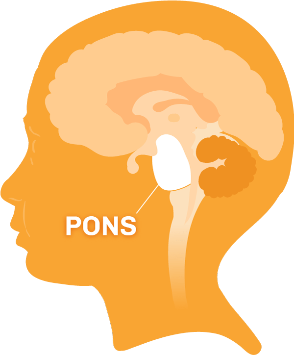 Diagram of the brain with the pons region highlighted.